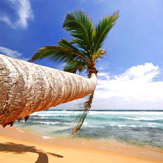 spa-программа Путешествие на Шри-Ланку